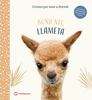 BUENAS NOCHES LLAMITA (CAT)